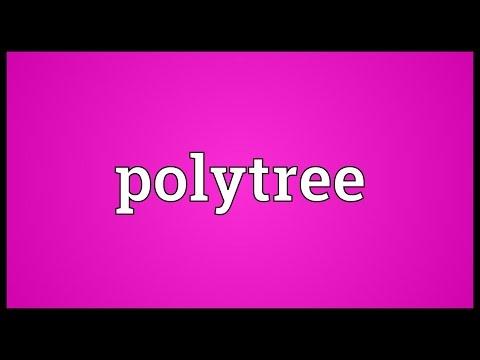 Header of Polytree