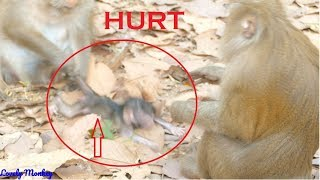 Poor Little Valentine Hurt!! Why Mother Queen Pull Baby Valentine Without Reason? Lovely Monkey.