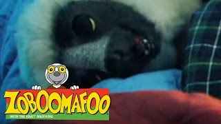 🐒 Zoboomafoo 🐒 109 | Night Time - Full Episode | Kids TV Shows