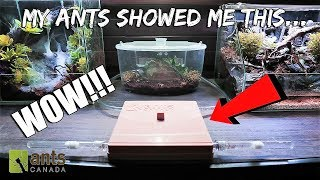 My PET ANTS Showed Me THIS in their New ANT FARM