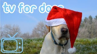 Christmas TV for Dogs! Dog TV Christmas Beach Walk with Music!