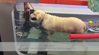UWTM: underwater treadmill therapy