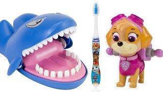 Paw Patrol Dentist Skye Brushes Shark Teeth Learning Video for Children | Fizzy Fun Toys