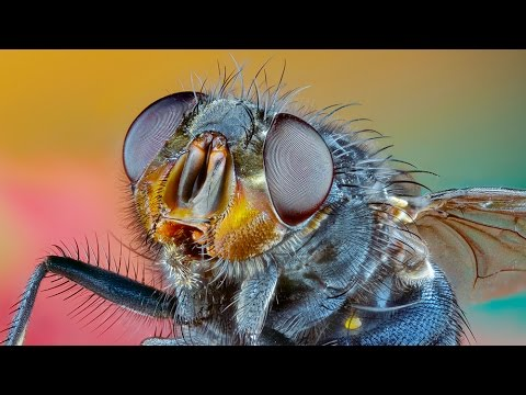 Parasites of insects - pasożyty owadów