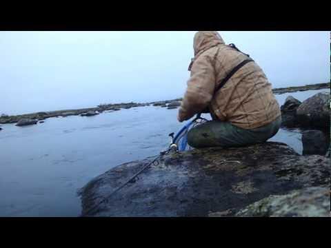 рыбалка чилиявр