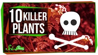 10 Plants That Could Kill You