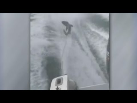 Viral video of high-speed boat dragging shark causes outrage