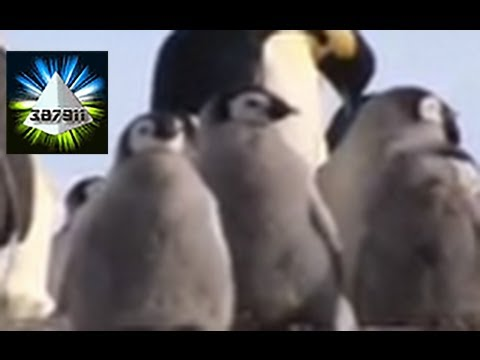 Penguins and Global Warming ★ Climate Change Devastates Emperor Penguins ♦ In Antarctica