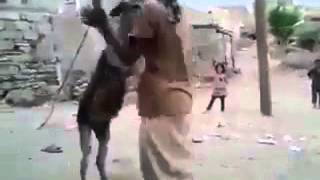 Pakistani man dancing with donkey