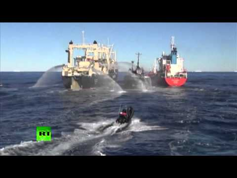 Sea Shepherd Sandwich: Anti-whaling activists rammed by Japanese ships