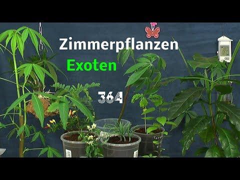 Zimmerpflanzen Exoten einfach zu pflegen