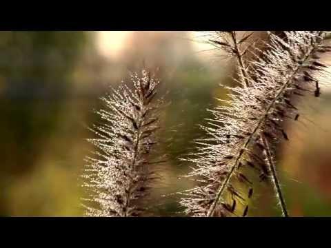 Gräser In Der Staudengärtnerei Gaissmayer