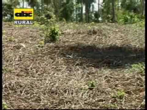 Recuperaciòn de suelos degradados