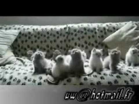 (فيديو hqdefault.jpg