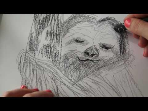 Faultier zeichnen - Tiere malen