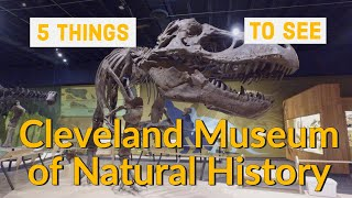 Cleveland Museum of Natural History – 5 great things to see