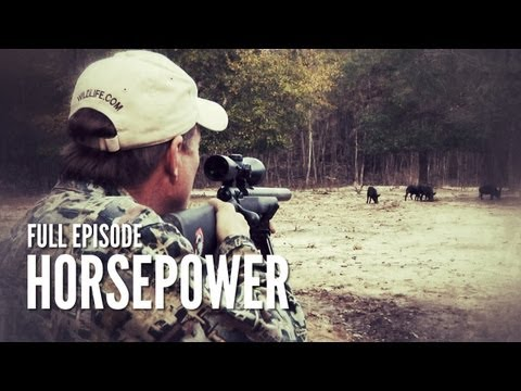Texas Hog Hunting With Suppressed Rifle | Horsepower video