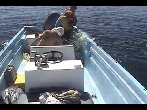 Saving Valentina, a Humpback whale