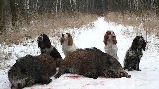 Охота на кабана!!! BOAR hunting the selection of the very interesting video boar hunting!!!