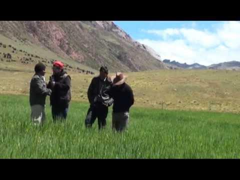 Serpentina del Perú - JUN23 - Aniversario Pomacocha. Yauli, La Oroya - Bloque 3