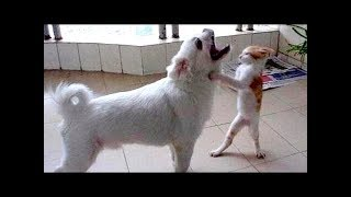 Funny Animals.Best Funny Compilation