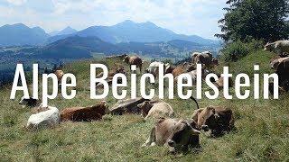 Wandern am Forggensee - Panoramawanderung zur Alpe Beichelstein