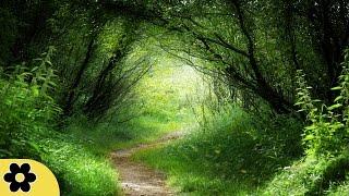 Meditatie en genezingsmuziek, Ontspanningsmuziek, Muziek voor Stress Verlichting, ✿2833C