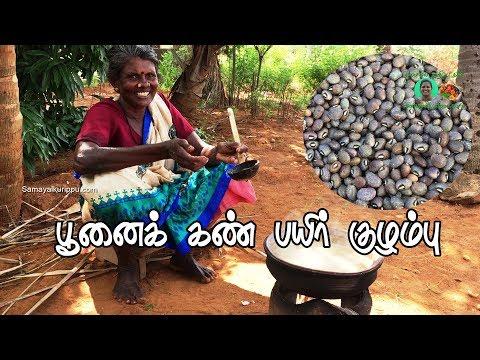 பூனைக் கண் பயிர் குழம்பு | Village food Poonai Kan Payir Kulambu | Village Cooking | Samayal kurippu