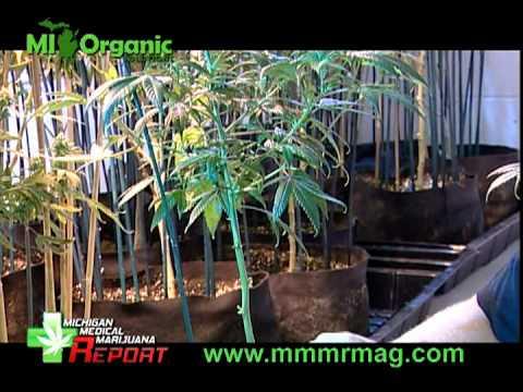 Advanced Training Medical Marijuana