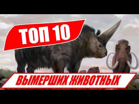 Самые большие Вымершие животные! ТОП 5