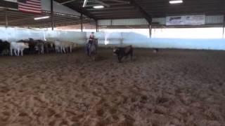 Gina- Jared Lesh cowhorses