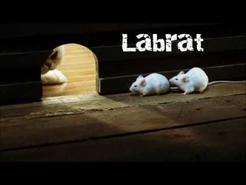 Labrat  - Cave Dweller