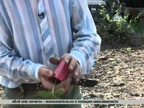 Дачная инспекция. Как выращивать огурцы