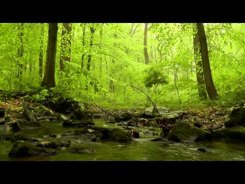 Relaxing Nature Scene #3: 60 minutes of Trickling Stream Sounds / Woodland Ambiance / Bird Sounds klip izle