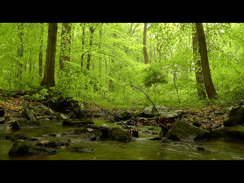 Relaxing Sounds of Nature 5: 60 minutes of Woodland Ambience with Birds & Trickling Stream Sounds