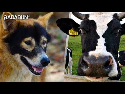 11 Animales con marcas increíbles