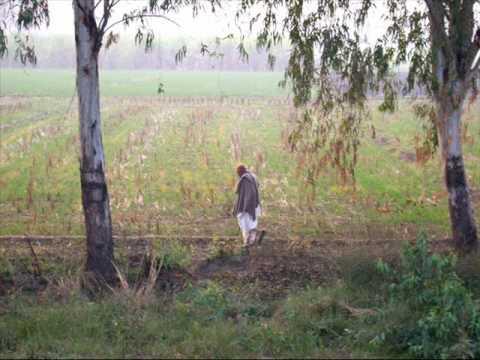 Basheera Choki Bhagat ماہی دے ڈیرے تے پیا بولے کاں Video