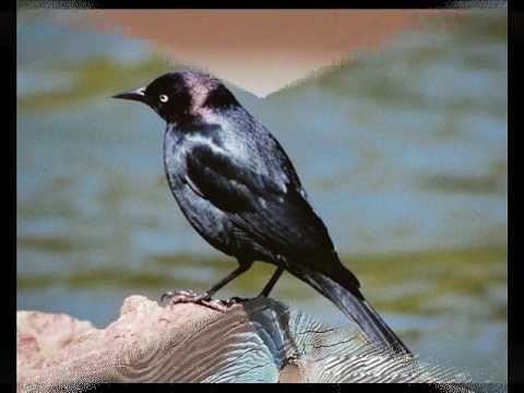 Chet Atkins - Bye Bye Blackbird
