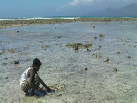 Alor Indonesie - pêche à la pieuvre