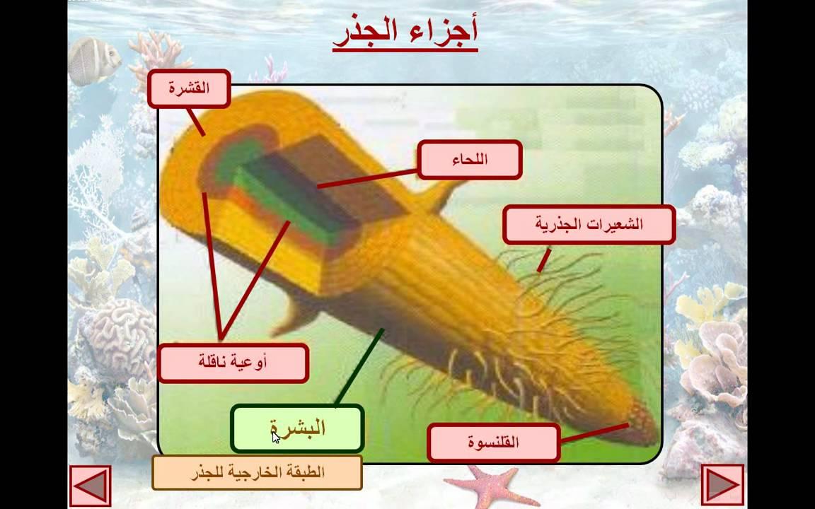 المنهج الدراسي اليمني كتاب العلوم للصف الثاني ابتدائي