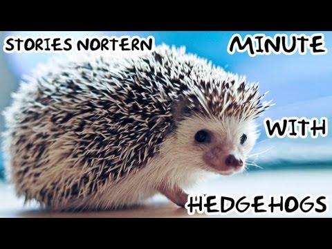 Minute with Нedgehog - Stories Northern