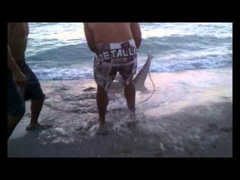 Shark Fishing on Turtle Beach Siesta Key