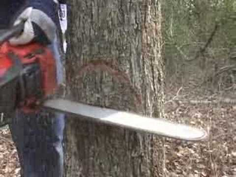 Cut A Tree Down Safely video