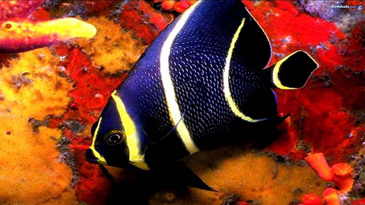 Beautiful Sea Beautiful Fish in The Sea