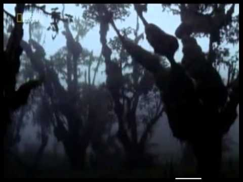 The Lost Film of Dian Fossey DOCUMENTARY (2002)