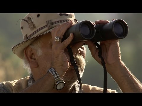 Following Leopards In Rajasthan - Leopards: An Unnatural History - Bbc video
