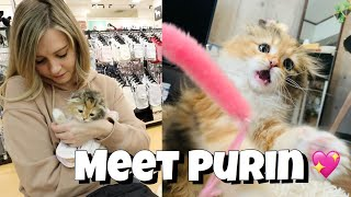 A Day at Home in Japan With Me 🐈