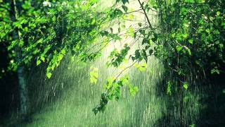 Sonido de la lluvia durante una hora, con truenos - sound of rain for an hour, with thunder