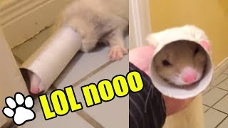 Funniest Ferrets of All Time   Funny Pet Videos 2018