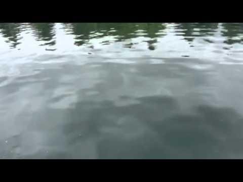 Fishing Lake Harveston ca
